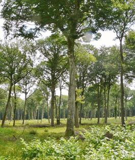 100 % oak Forestry management Terroir